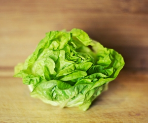 Lettuce for Insomnia
